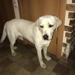 Пропала собака!, Челябинск