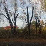 Дровосекъ за пару секЪ, Челябинск